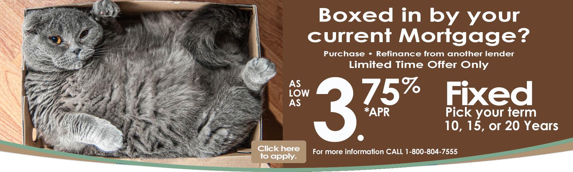 mortgage cat in box
